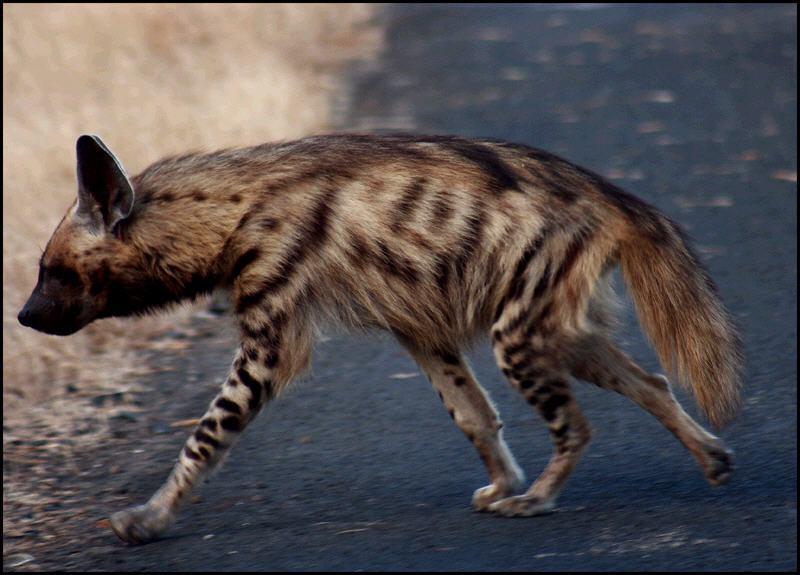 虎前肢骨骼结构图
