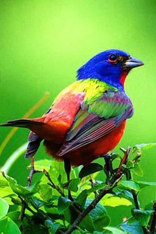 壁纸 动物 鸟 鸟类 雀 320_480 竖版 竖屏 手机