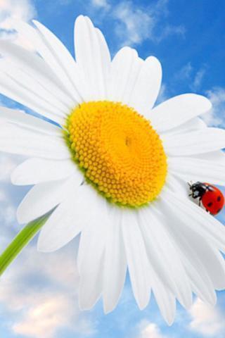 标签:花,春天的花朵,3d花,玫瑰,太阳花,樱花,牡丹,梅花,桃花,海棠