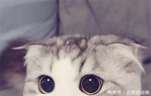 委屈的表情,一下子心都要被它化了,这么可爱的猫咪换作是谁都舍不得