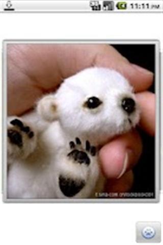 可爱搞笑的动物图片_360手机助手