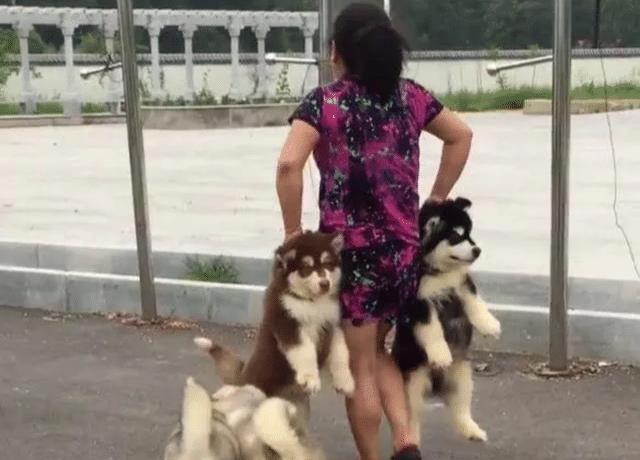小狗不愿意回家,霸气奶奶一手一个提着,狗狗怒了:我不要面子啊