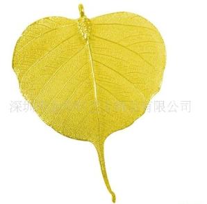 双子叶植物叶片横切面结构简图