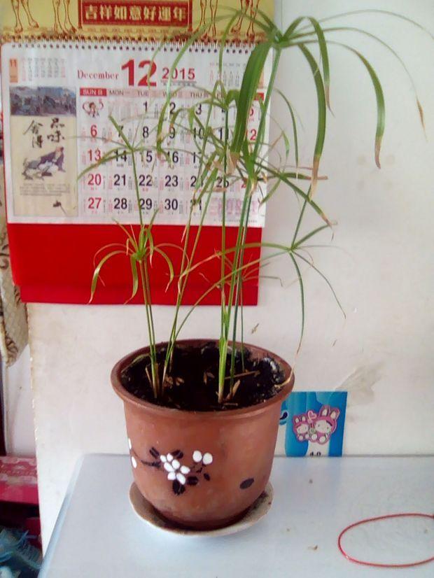 丙烯手绘花盆竹子