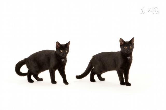 大猫和小猫哪个好喂养?