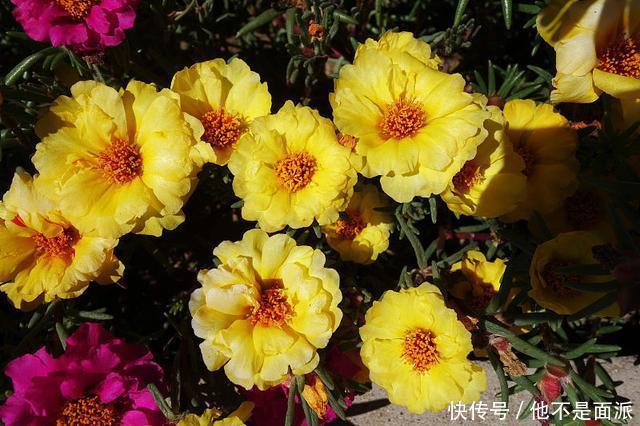 夏季花草生长不好种植这几种花草,夏季花园花团锦簇