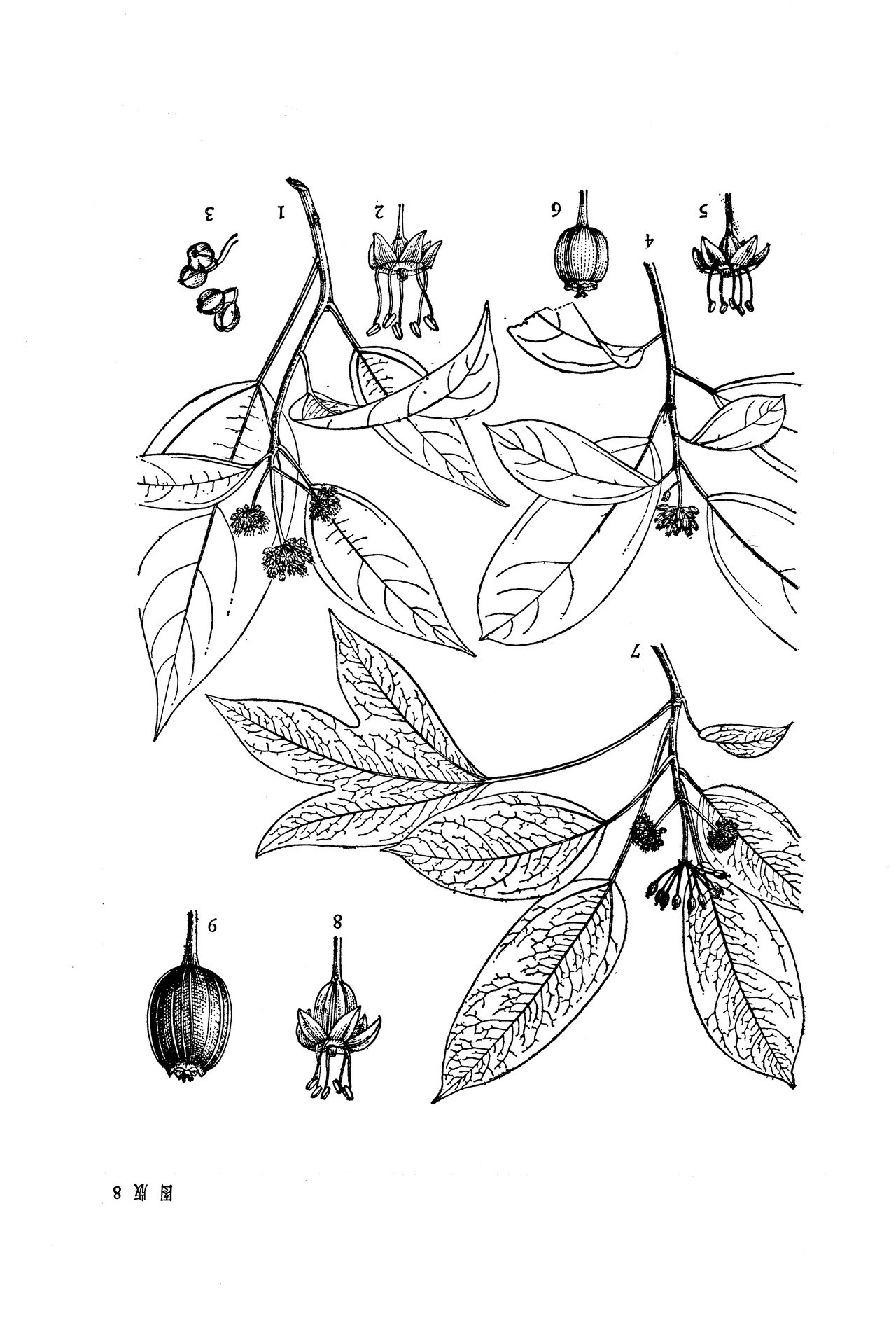 果树画图片素材