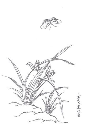 铅笔怎么画兰花