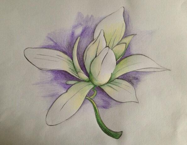 张晓画的木兰花是什么画法