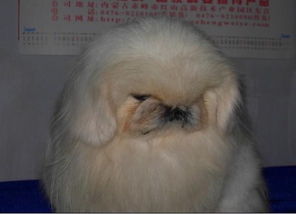 嘴巴尖尖胡须长长的动物图片