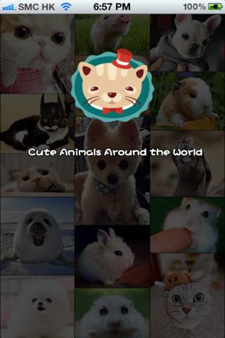 动物萌图_360百科
