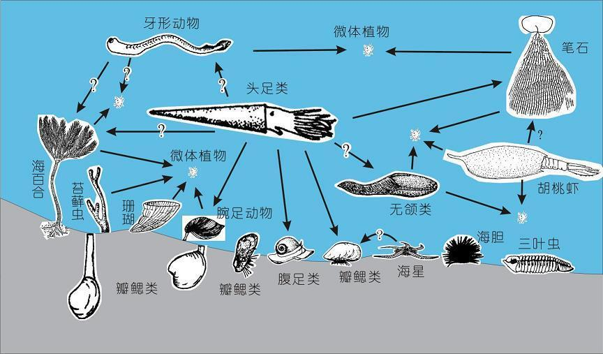低等海生植物继续发展