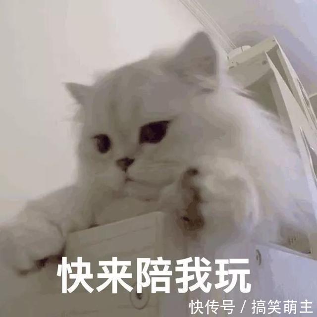 卖萌表情表情:你这个小可爱,电你喔v表情搞笑猫咪图片
