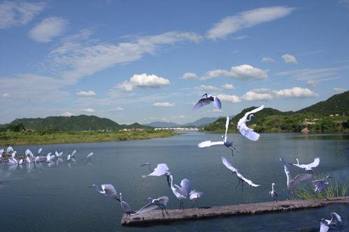 白鹭岛生态旅游风景区位于安徽省滁州市来安县城西北13公里处,距古都