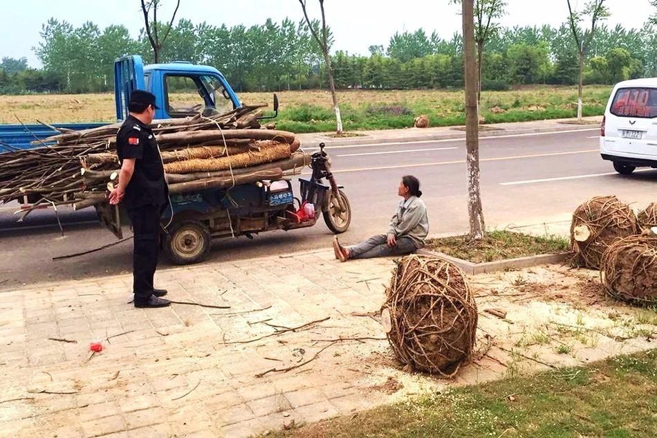【转】北京时间       大妈狂锯19棵绿化树 1毛钱1斤卖掉 - 妙康居士 - 妙康居士~晴樵雪读的博客