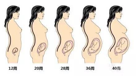 胎儿的形成和成长过程:科谱知识 - 一统江山 - 一统江山的博客