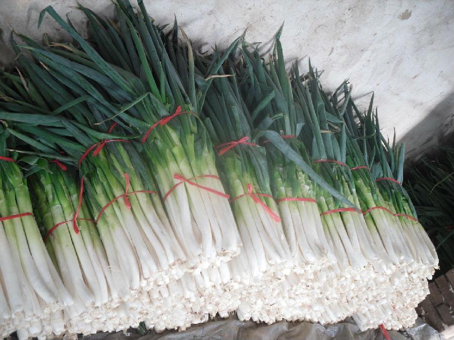 大葱根系结构图