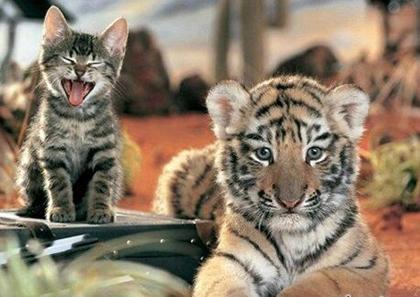 老虎搞笑动态图