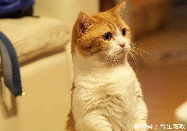 埃及猫怎么养 埃及猫的价格及传说