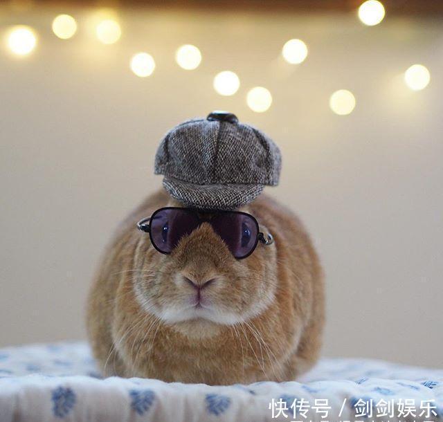 最近爆火的两只兔子,拥有10万粉丝,看完我也被