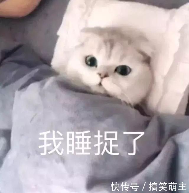卖萌猫咪表情:你这个小可爱,电你喔一样想跟表情包的我图片