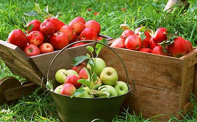 土层稀松利于排水透气,更利于苹果树根系生长.