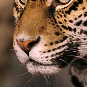 动物鼻子免费14.07.19安卓客户端下载