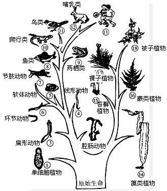 地球上最早出现的脊椎动物是(