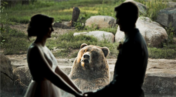 大灰熊乱入情侣婚纱照 实力演绎羡慕嫉妒恨