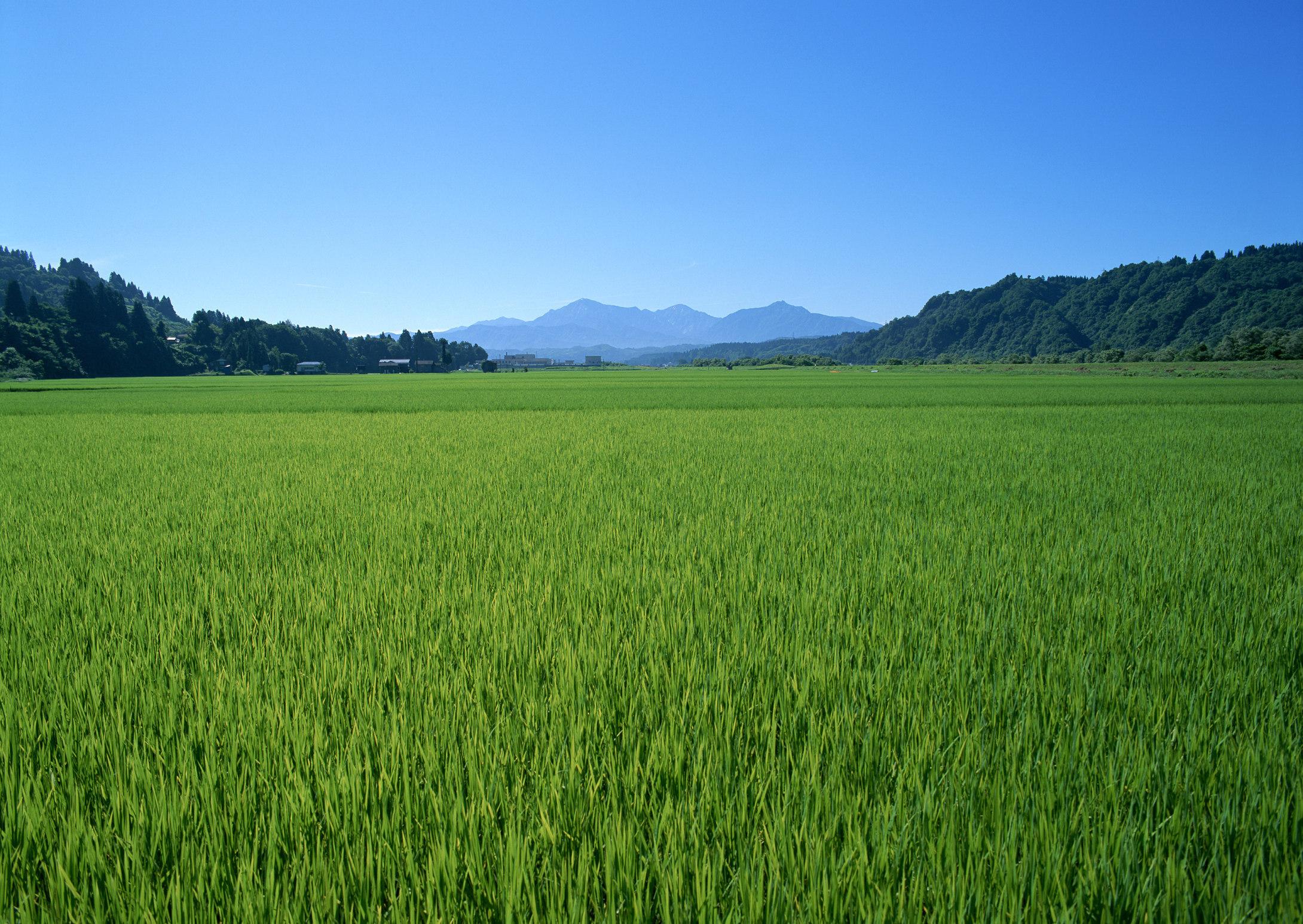 壁纸 草原 成片种植 风景