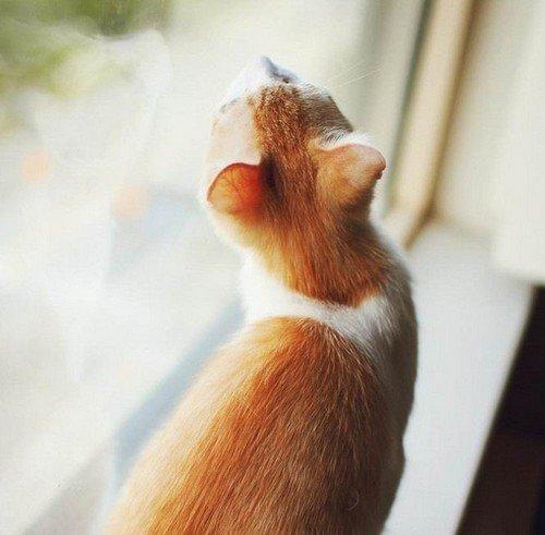 SaraLynnPaige家里的那只小猫咪