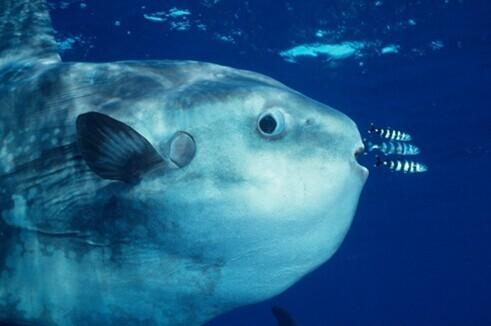 深海里有哪些鲜为人知的神秘生物?