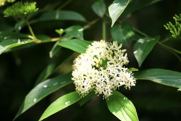 请问这是什么树木在开花?