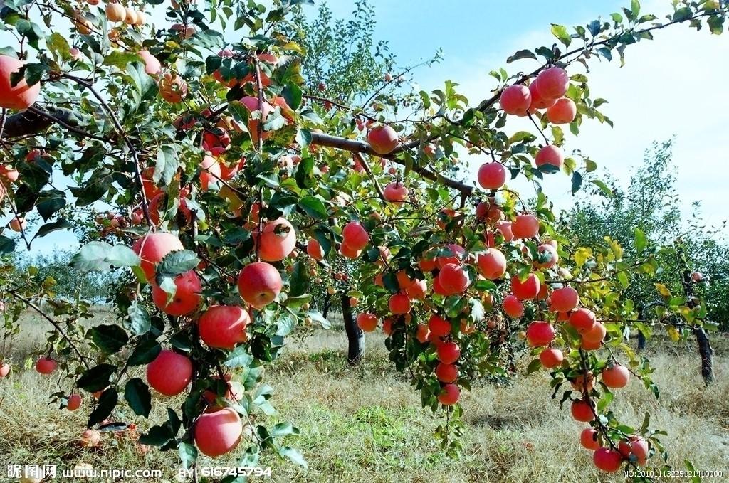 苹果六壁纸图片可爱