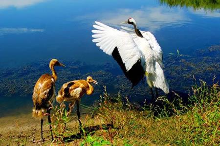 双台河口国家级自然保护区