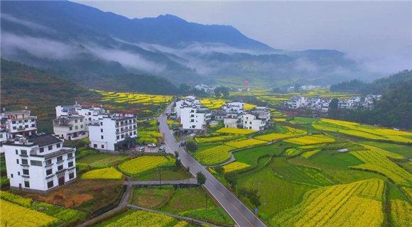 """航拍""""中国最美乡村""""江西婺源 油菜花进入盛花期"""