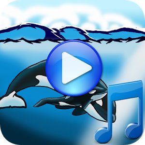 睡觉的鲸鱼歌曲