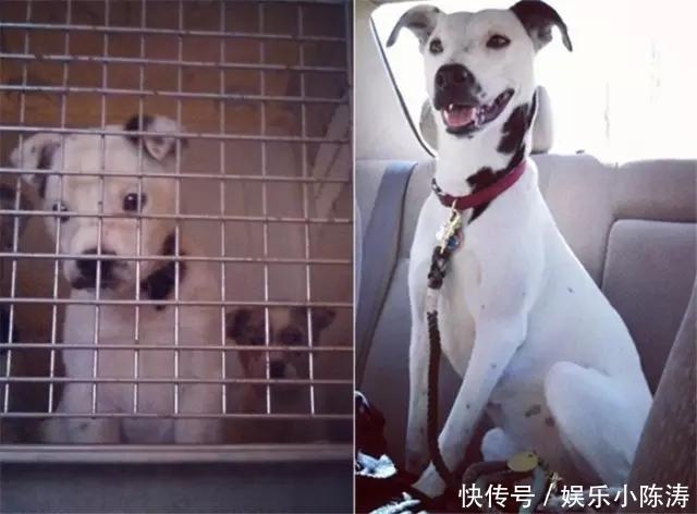 流浪狗被收养前后大对比,爱能改变生活,也能收获温暖!