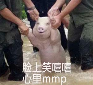 地震被拖的猪搞笑表情包...