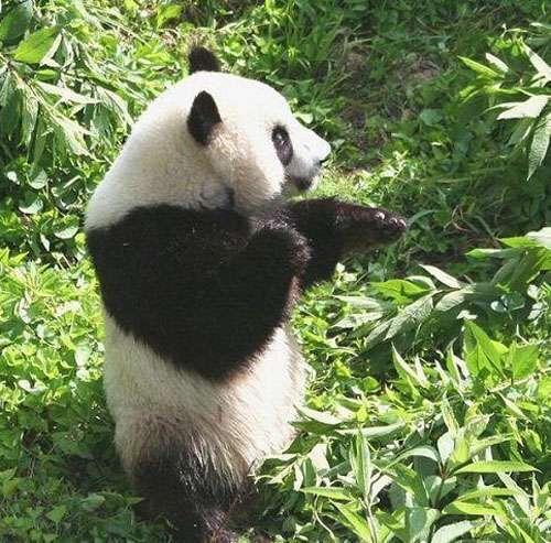 北京野生动物园_好搜百科