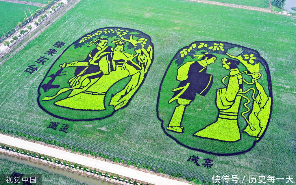 现代农业示范园区内的稻田画