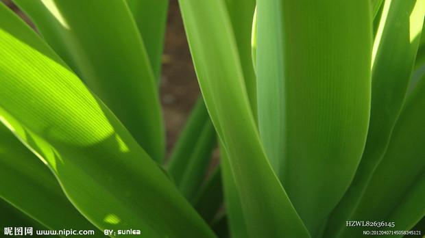 绿叶花卉图片及名称 这是什么名字的花卉