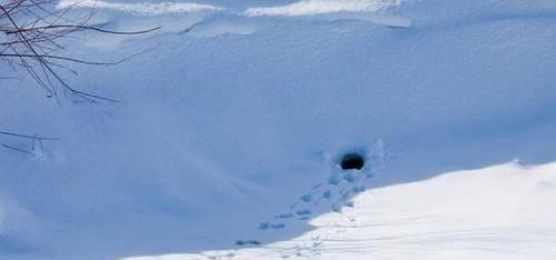 暴雪过后,一位英国男子来到深山之中散步,可是在这个过程中,他却遇到了一件让他出乎意料的事情