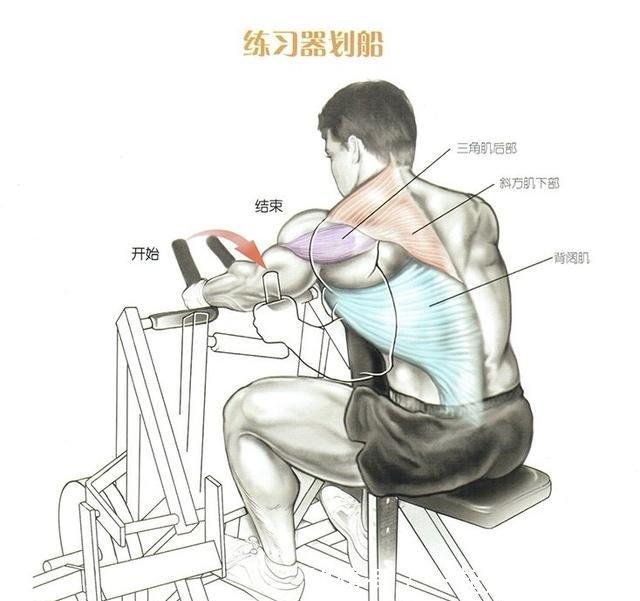 v方式方式锻炼视频教程群图解肌肉背部甘陀利图片