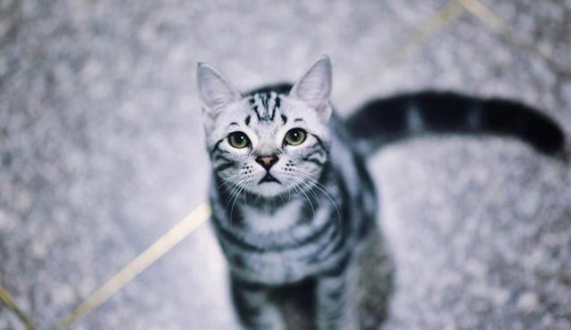 猫咪总是吃猫砂怎么办?教你几招