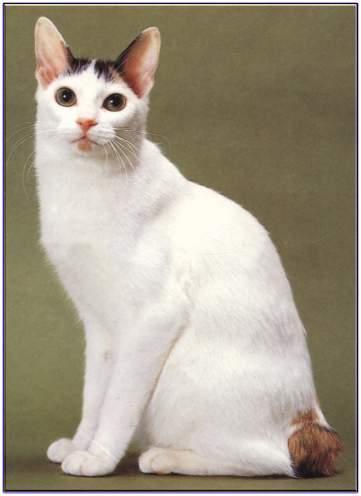 壁纸 动物 猫 猫咪 小猫 桌面 361_496 竖版 竖屏 手机