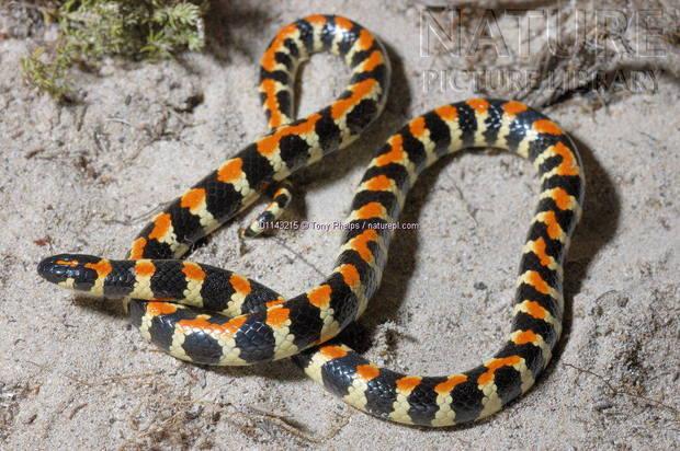 微信动物头像蛇