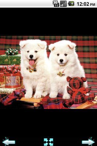 动物的圣诞壁纸