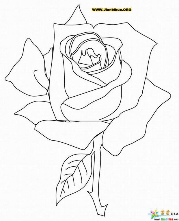 六年级下册美术书第六课的玫瑰花怎么画图片