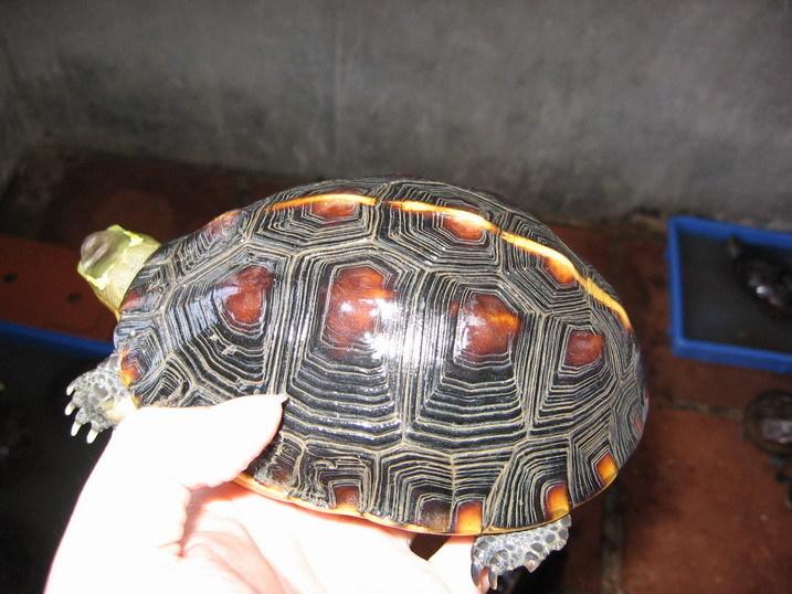 布乌龟的做法大全图解